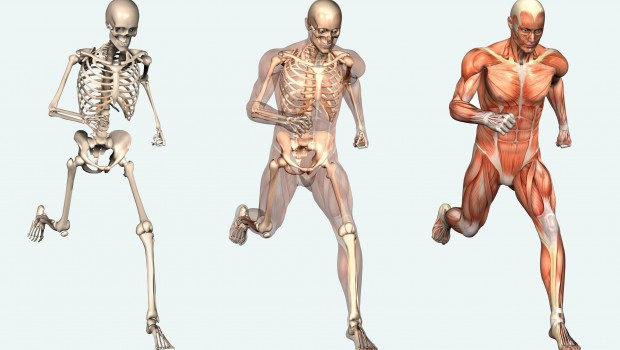 The-Human-Body-is-a-Machine-620x350