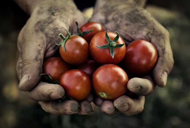 tomatoes-fight-prostate-cancer-617x416